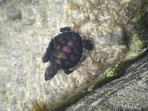 A Baby Turtle