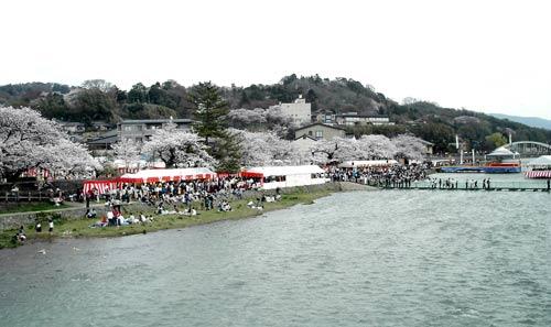 Cherry-Blossom Viewers at Asanogawa, Kanazawa