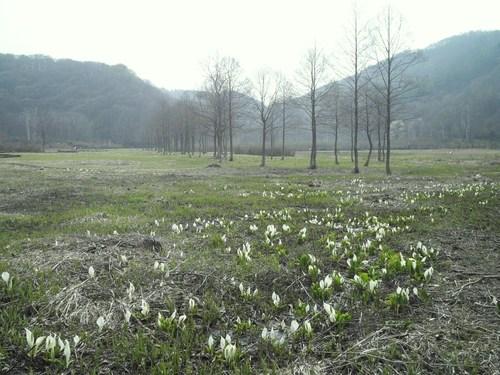 Numanohara Marsh