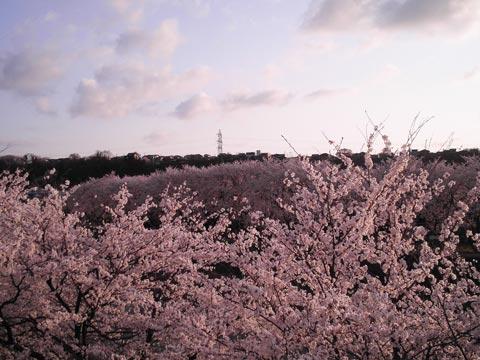 Kanazawa in Rosy Haze 1