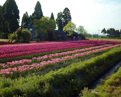 Tonami, Toyama